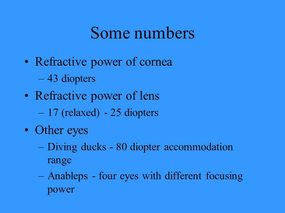 Some numbers Refractive power of cornea Refractive power of lens
