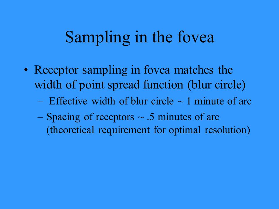 Sampling in the fovea Receptor sampling in fovea matches the width of point spread function (blur circle)