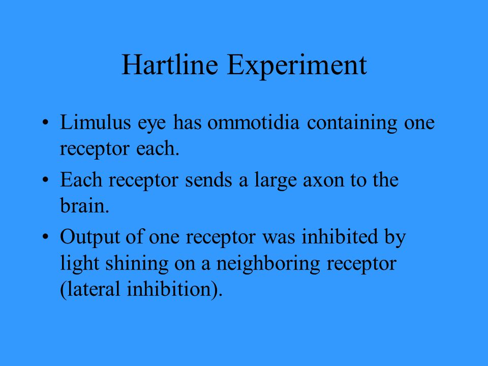 Hartline Experiment Limulus eye has ommotidia containing one receptor each. Each receptor sends a large axon to the brain.