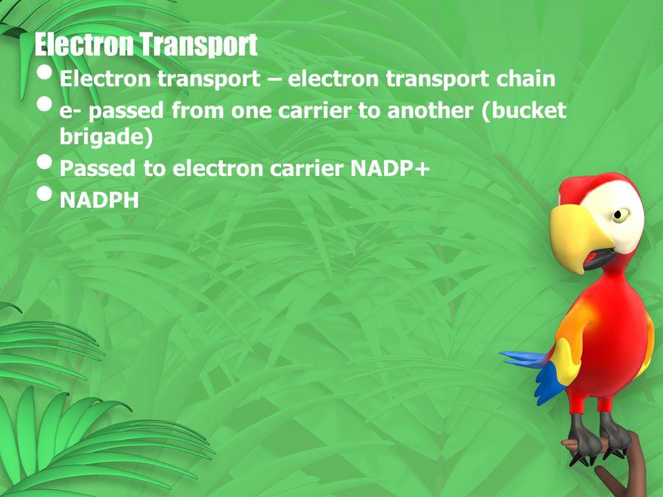 Electron Transport Electron transport – electron transport chain