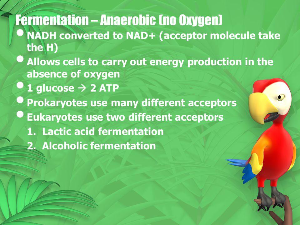 Fermentation – Anaerobic (no Oxygen)