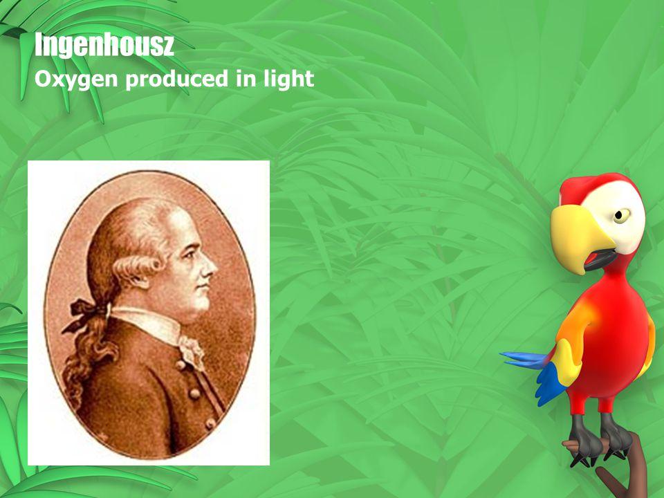 Ingenhousz Oxygen produced in light