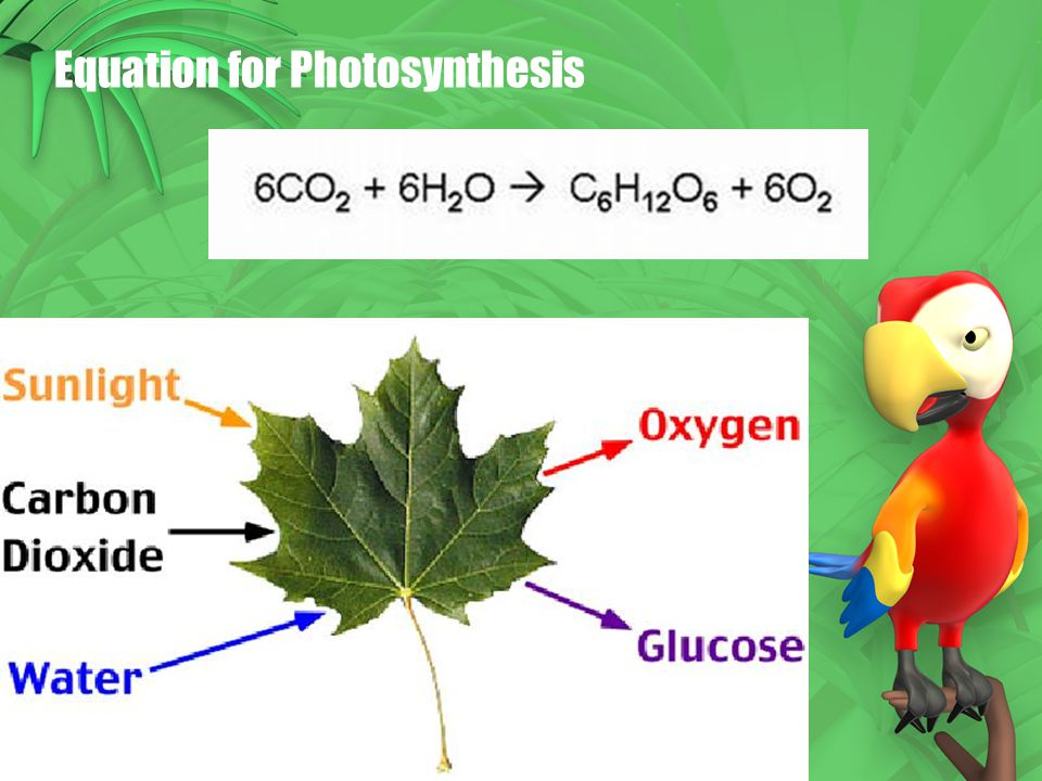 equation for phtosynthesis Photosynthesis is the process by which plants, and some bacteria, use solar energy to produce sugar this process converts light energy to chemical energy, which is stored in the sugars this process is important for two reasons first, photosynthesis provides the energy that is used by all other organisms to survive.