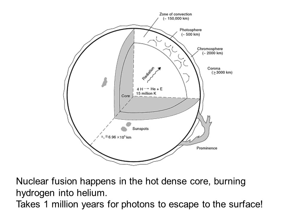 Nuclear fusion happens in the hot dense core, burning hydrogen into helium.