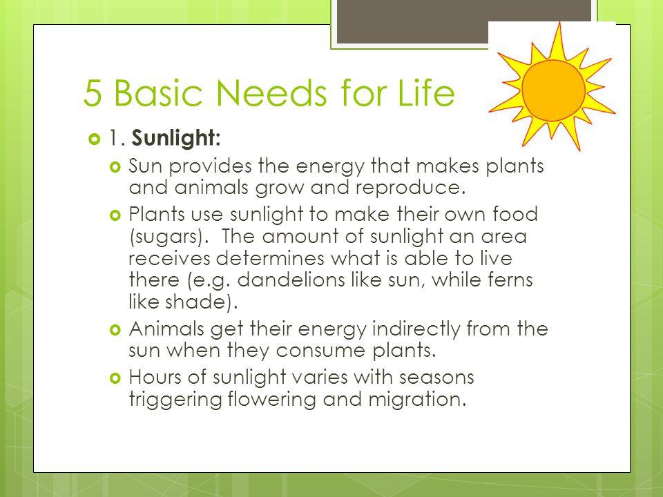 5 Basic Needs for Life 1. Sunlight: