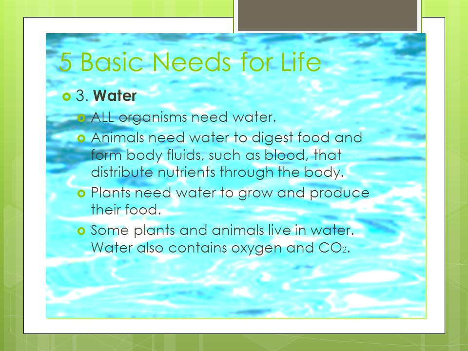 5 Basic Needs for Life 3. Water ALL organisms need water.