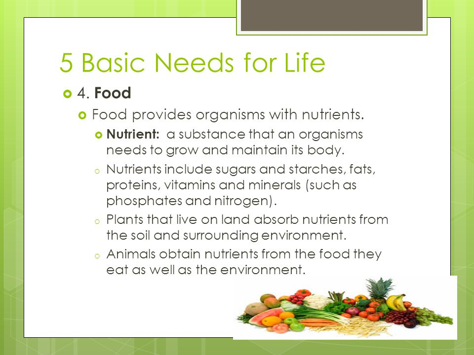 5 Basic Needs for Life 4. Food Food provides organisms with nutrients.
