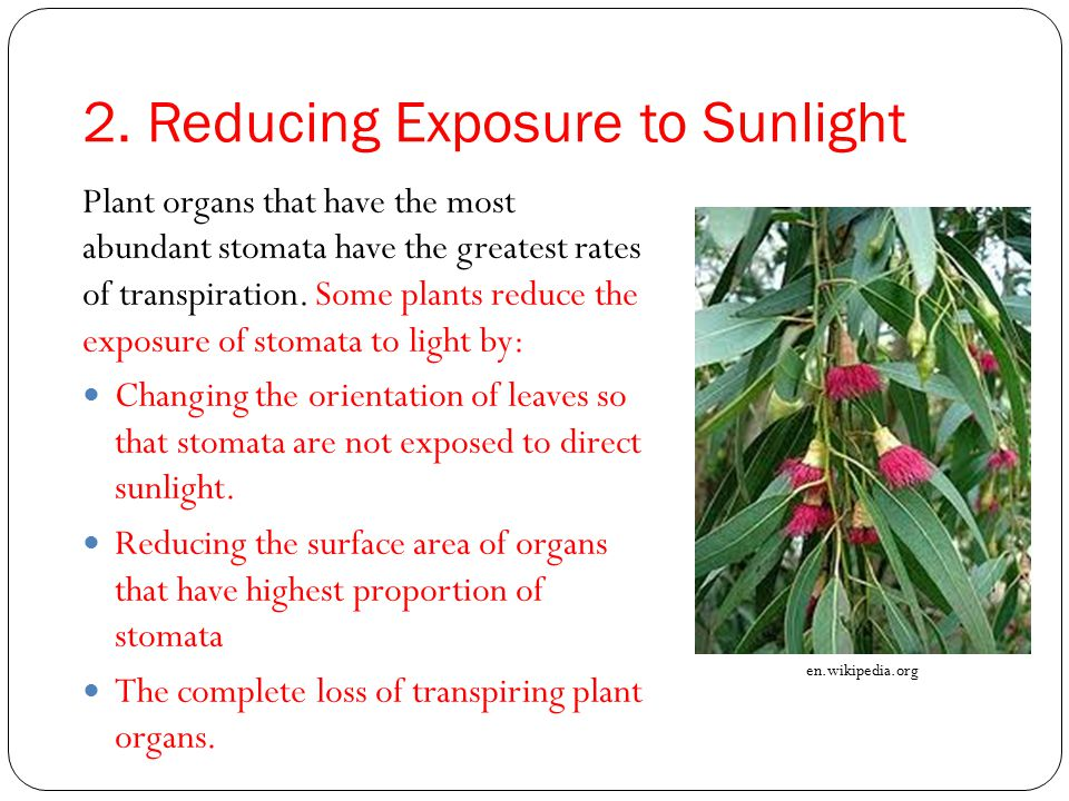 2. Reducing Exposure to Sunlight