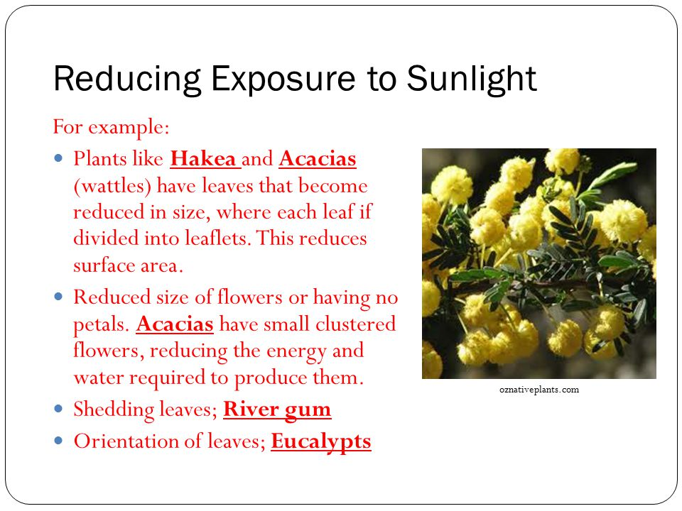 Reducing Exposure to Sunlight