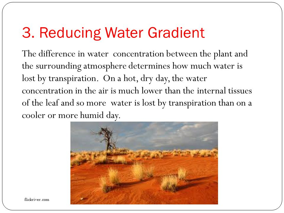 3. Reducing Water Gradient