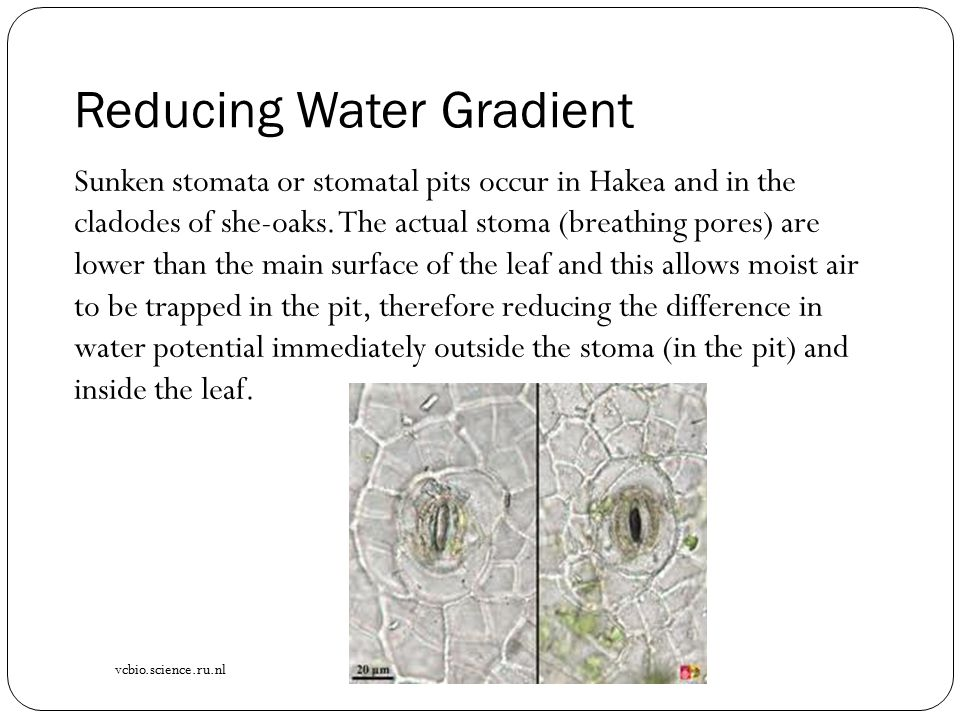 Reducing Water Gradient