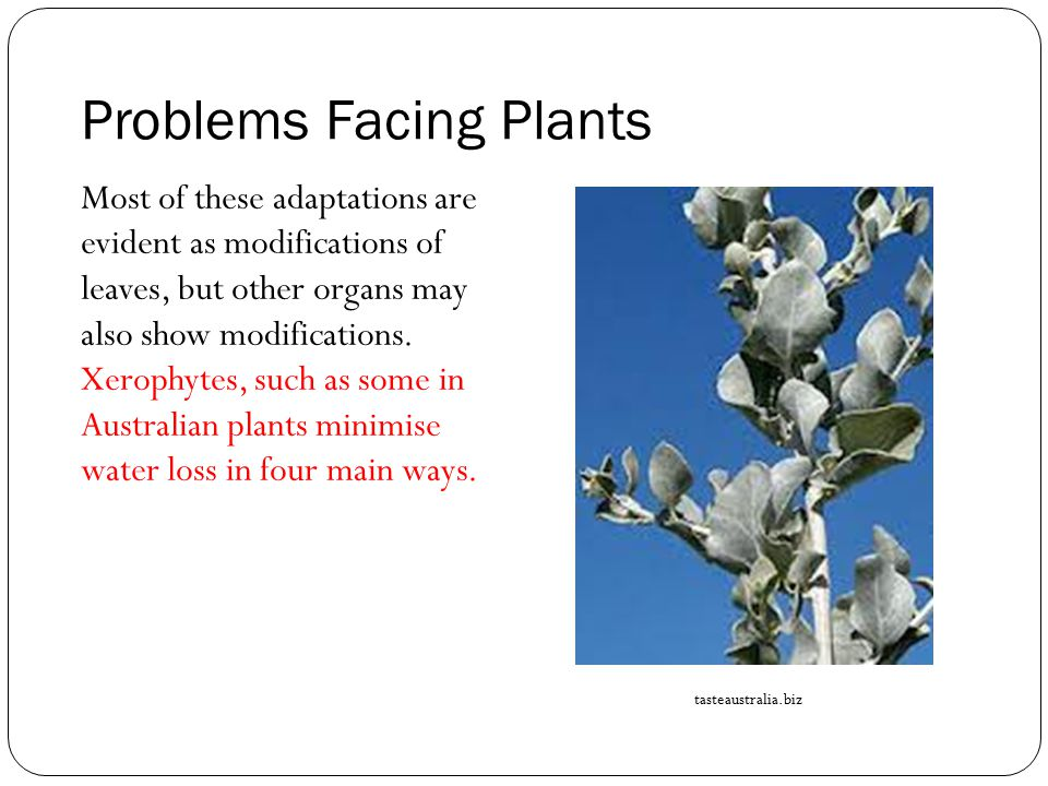 Problems Facing Plants