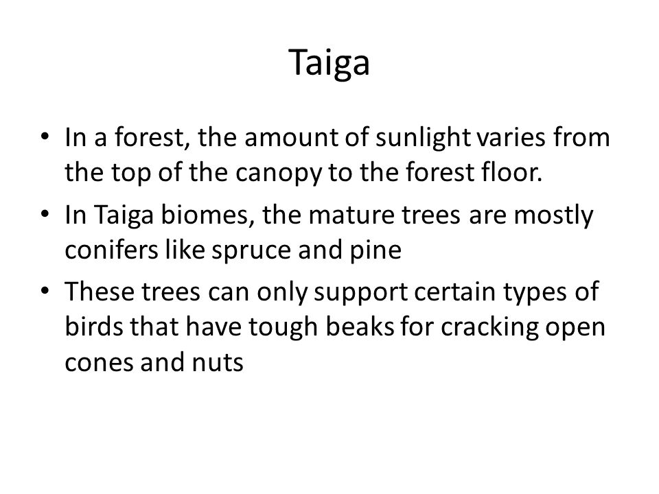 Taiga In a forest, the amount of sunlight varies from the top of the canopy to the forest floor.