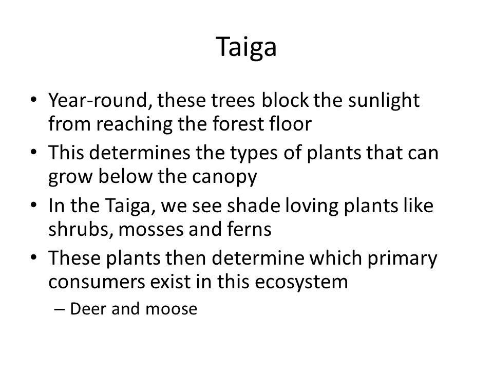 Taiga Year-round, these trees block the sunlight from reaching the forest floor. This determines the types of plants that can grow below the canopy.
