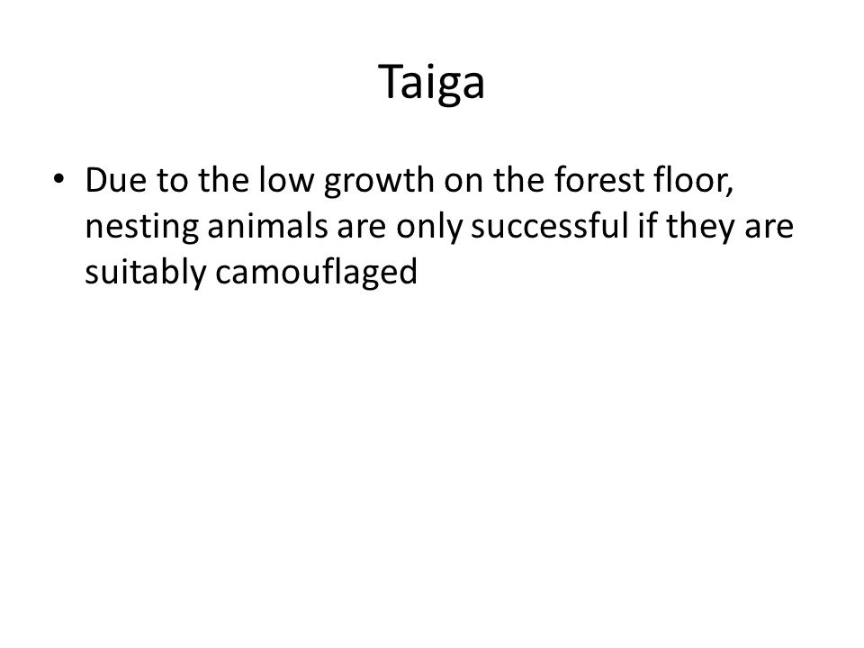 Taiga Due to the low growth on the forest floor, nesting animals are only successful if they are suitably camouflaged.