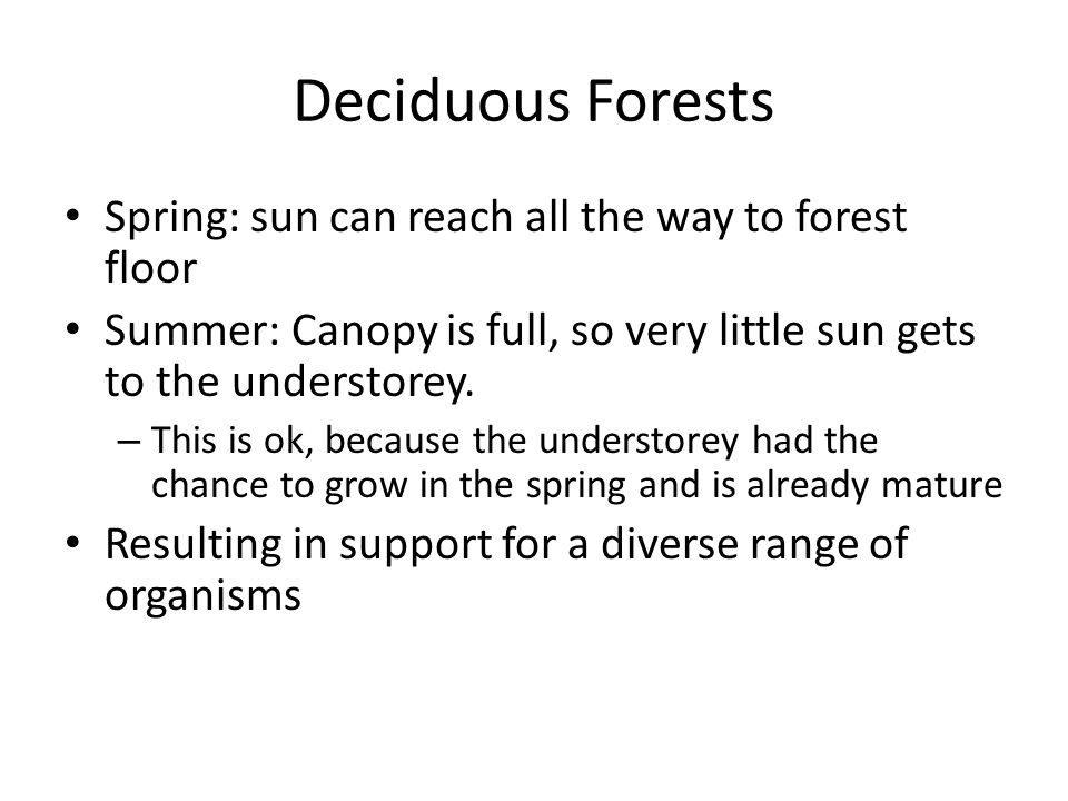Deciduous Forests Spring: sun can reach all the way to forest floor