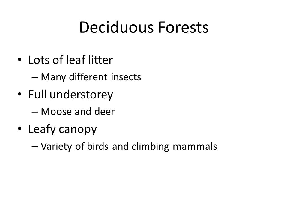 Deciduous Forests Lots of leaf litter Full understorey Leafy canopy
