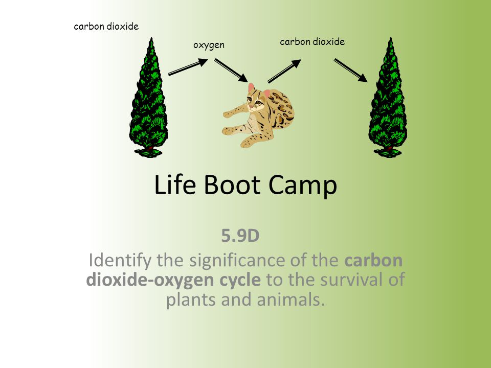 carbon dioxide oxygen. Life Boot Camp. 5.9D.