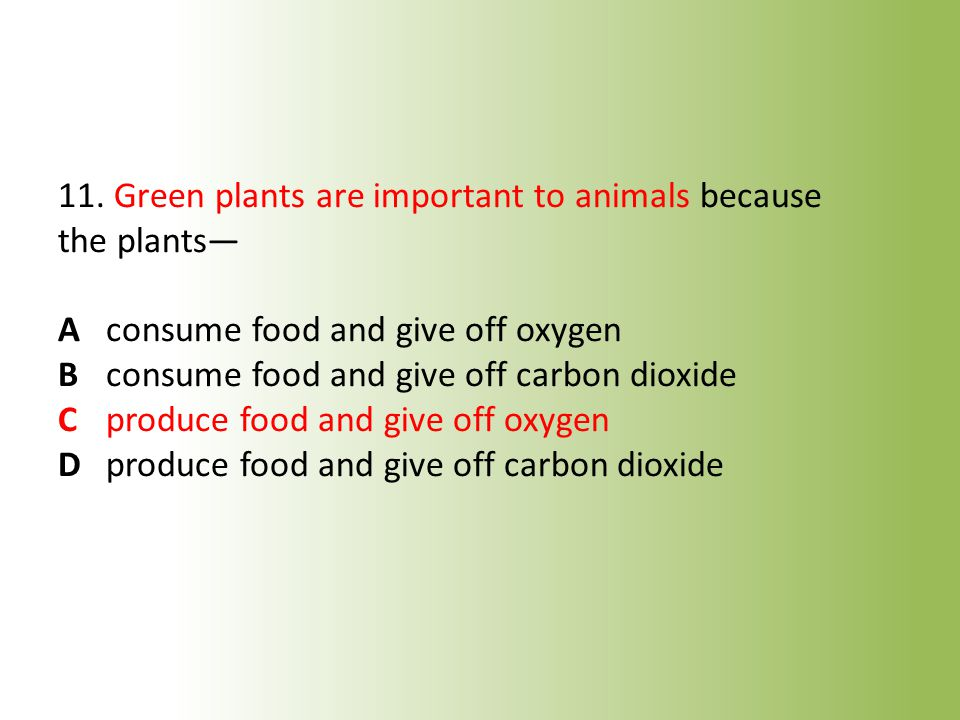 11. Green plants are important to animals because the plants— A