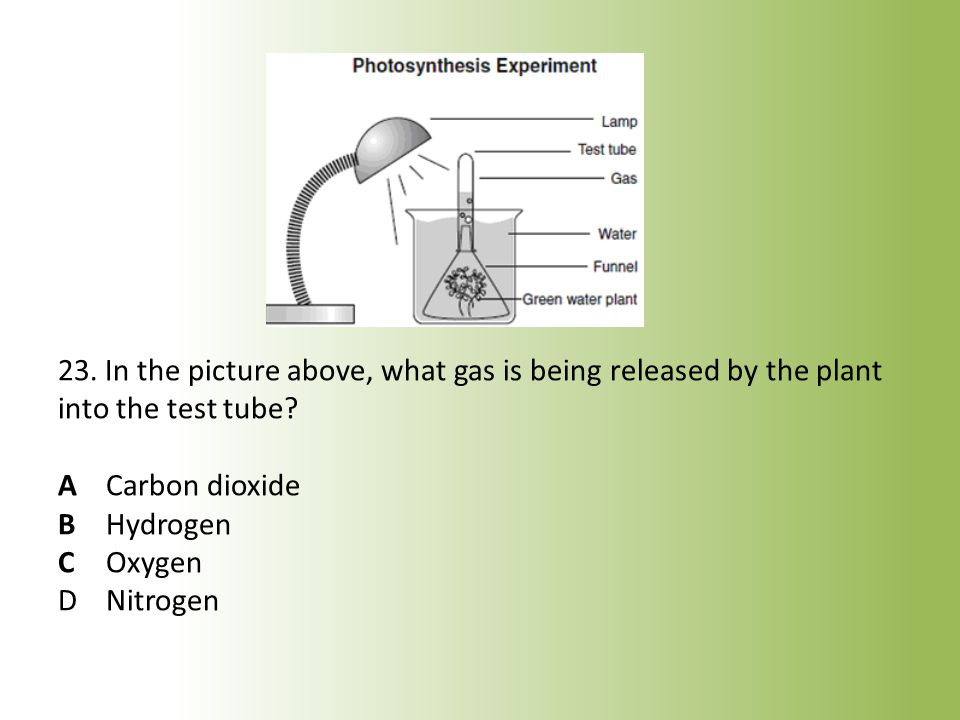 23. In the picture above, what gas is being released by the plant into the test tube.