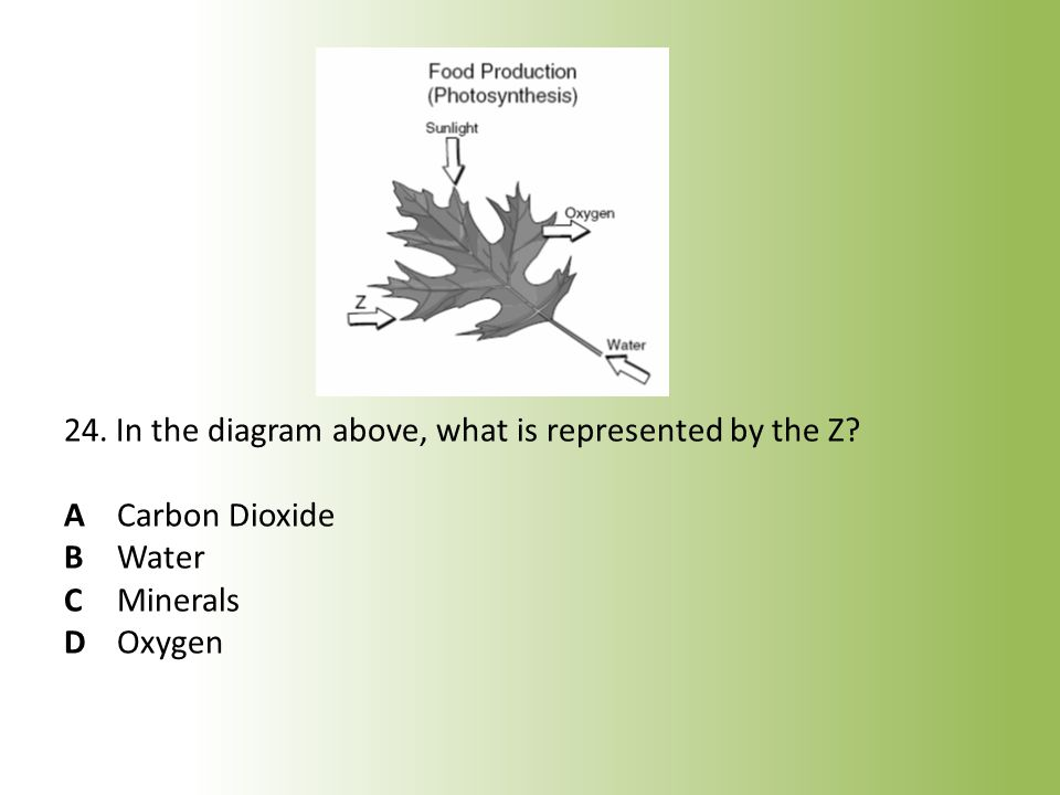 24. In the diagram above, what is represented by the Z. A