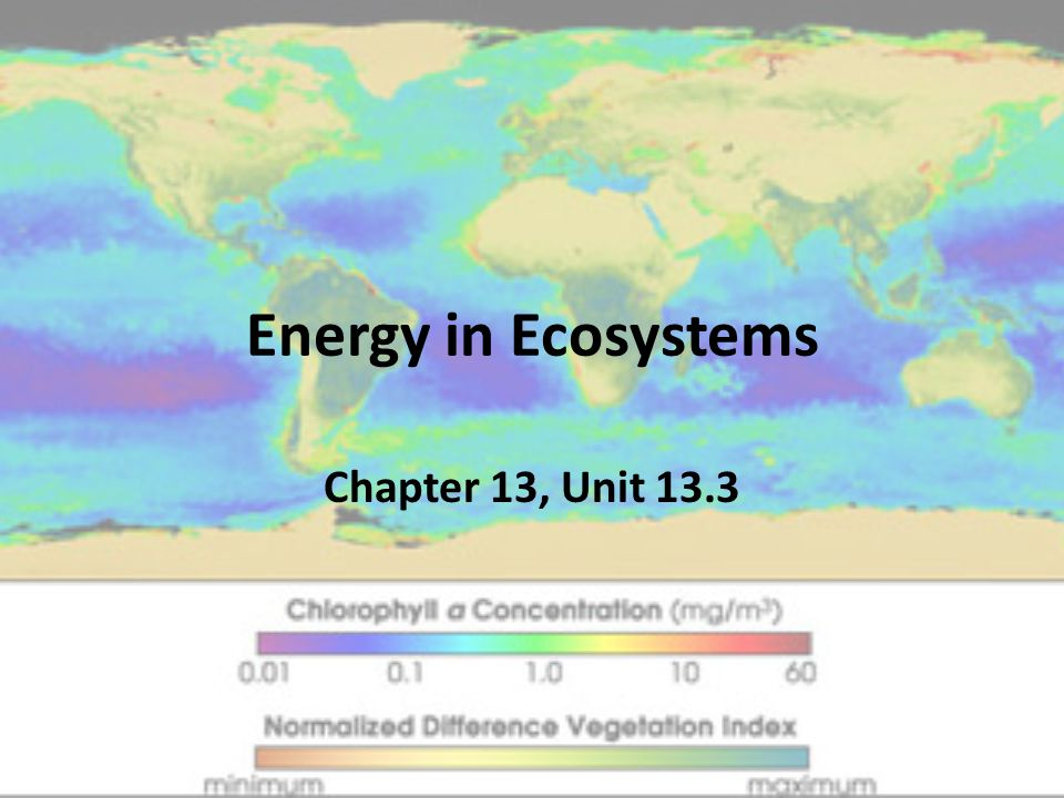 Energy in Ecosystems Chapter 13, Unit 13.3