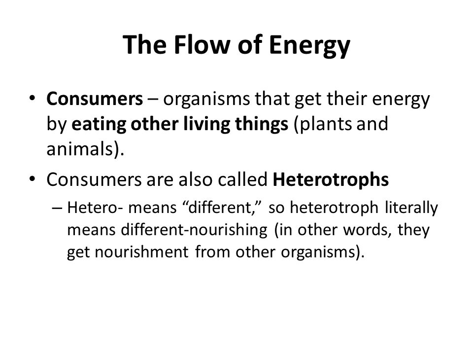 The Flow of Energy Consumers – organisms that get their energy by eating other living things (plants and animals).