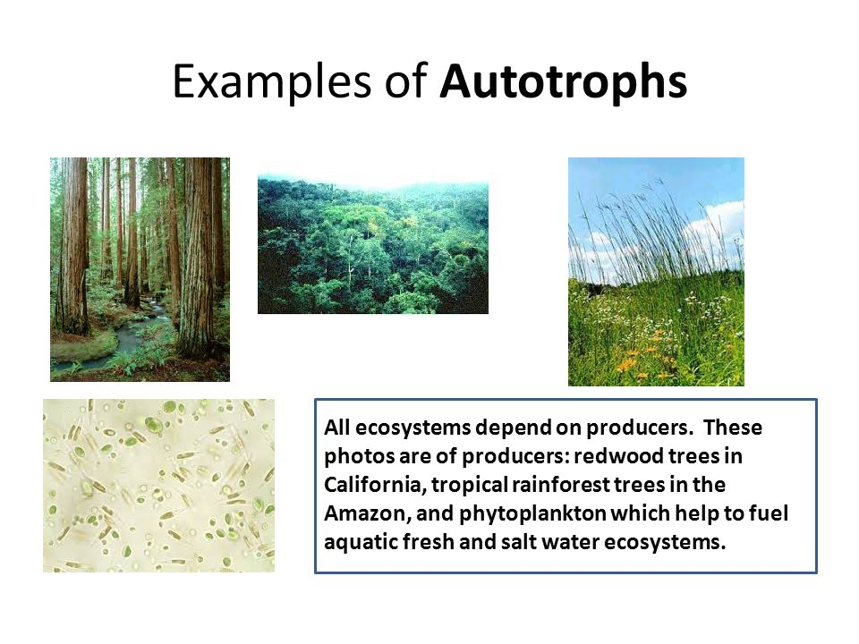 Examples of Autotrophs