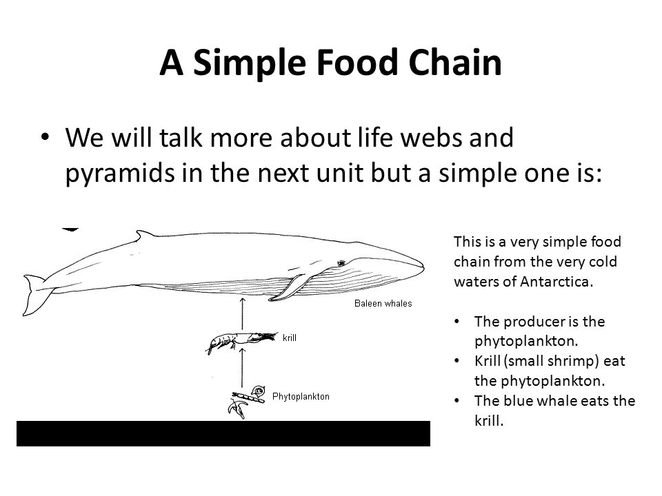 A Simple Food Chain We will talk more about life webs and pyramids in the next unit but a simple one is: