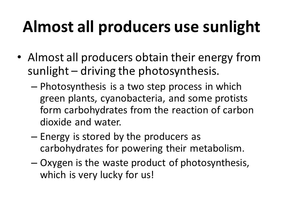 Almost all producers use sunlight