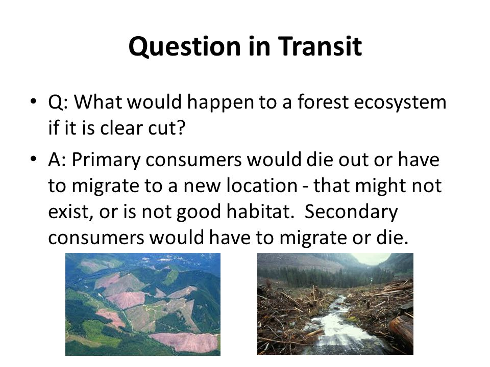 Question in Transit Q: What would happen to a forest ecosystem if it is clear cut