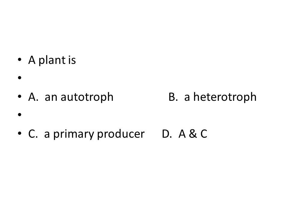 A plant is A. an autotroph B.