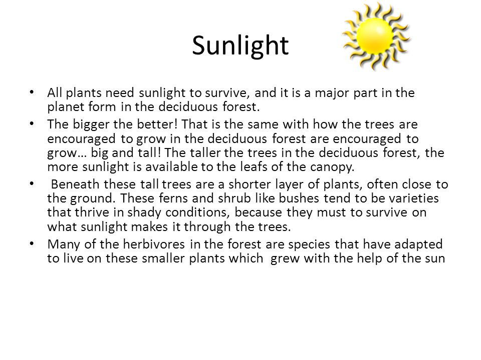 Sunlight All plants need sunlight to survive, and it is a major part in the planet form in the deciduous forest.