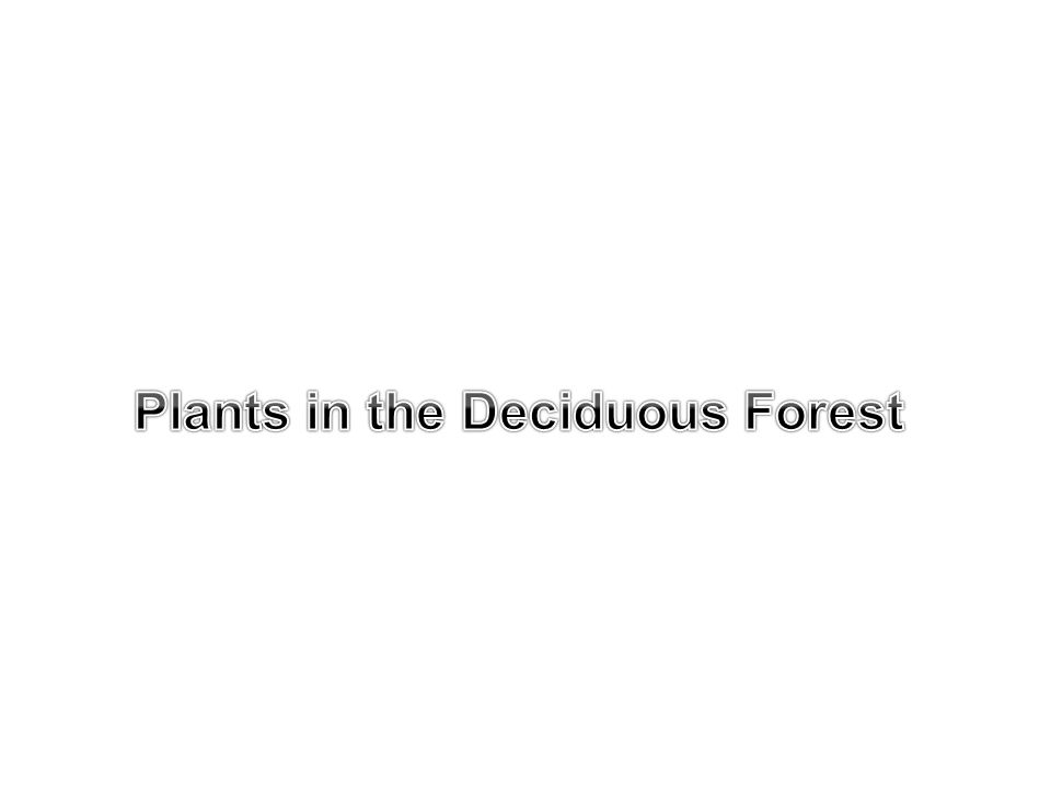 Plants in the Deciduous Forest