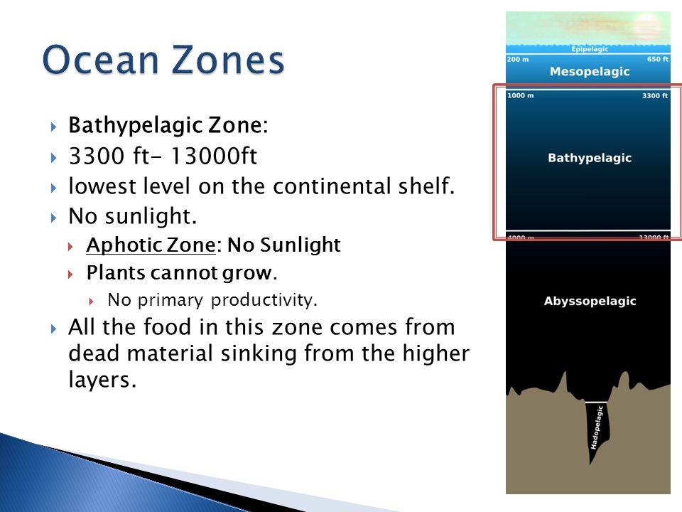 Ocean Zones 3300 ft ft Bathypelagic Zone: