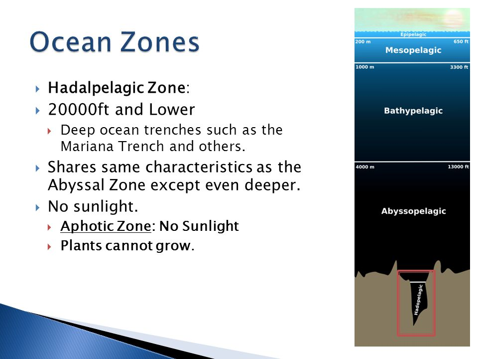 Ocean Zones 20000ft and Lower Hadalpelagic Zone: