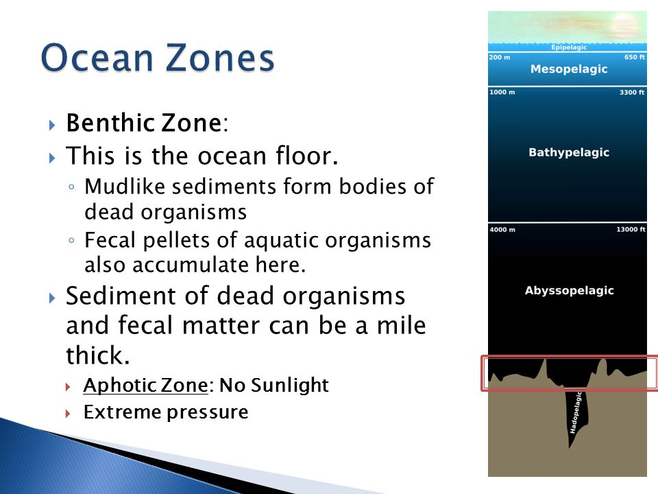 Ocean Zones Benthic Zone: This is the ocean floor.
