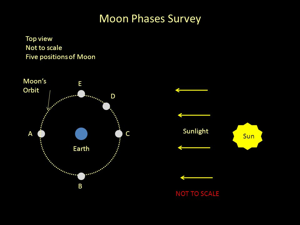 Moon Phases Survey Top view Not to scale Five positions of Moon Sun