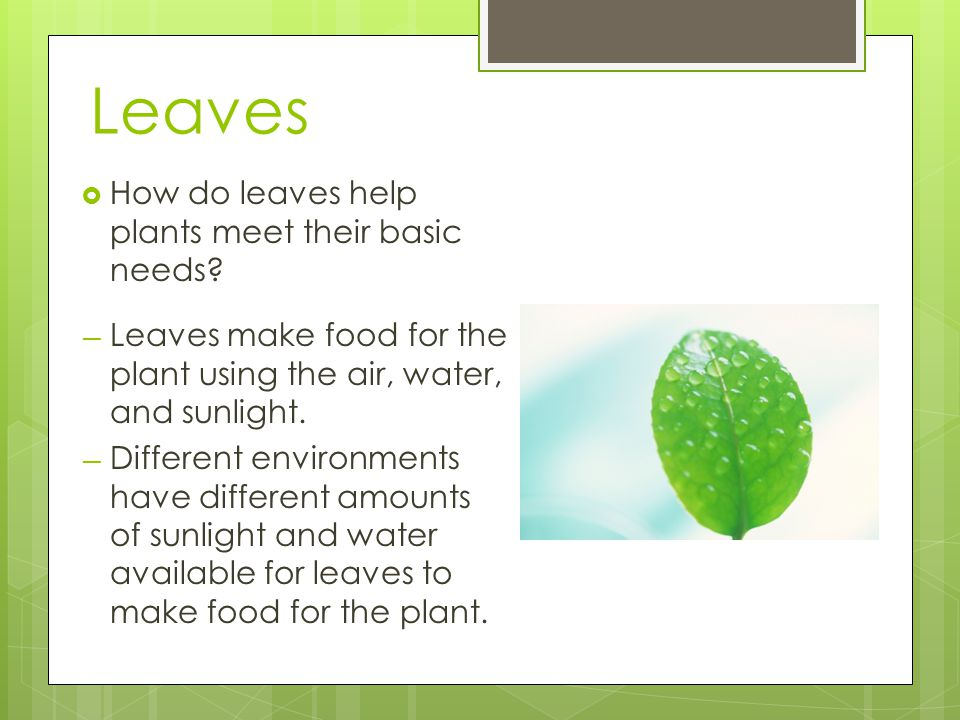 Leaves How do leaves help plants meet their basic needs