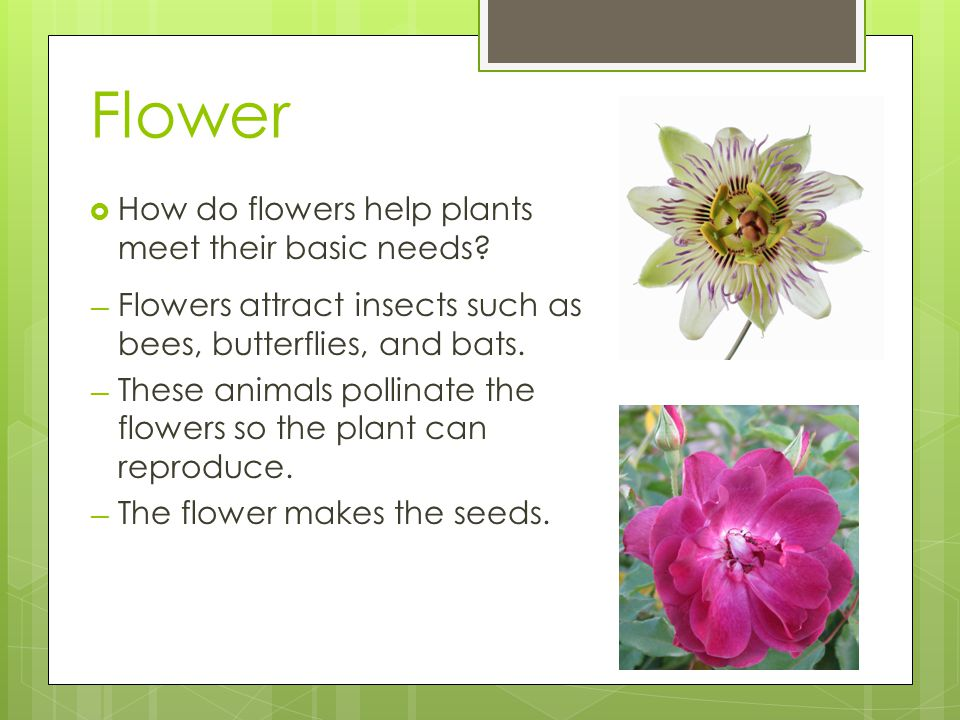 Flower How do flowers help plants meet their basic needs