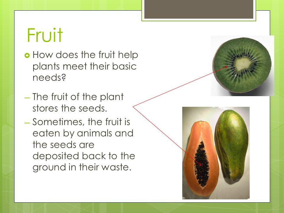 Fruit How does the fruit help plants meet their basic needs
