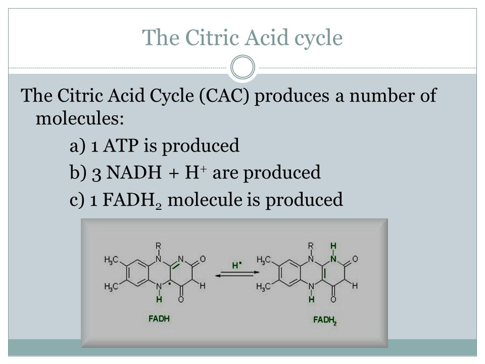 The Citric Acid cycle The Citric Acid Cycle (CAC) produces a number of molecules: a) 1 ATP is produced.
