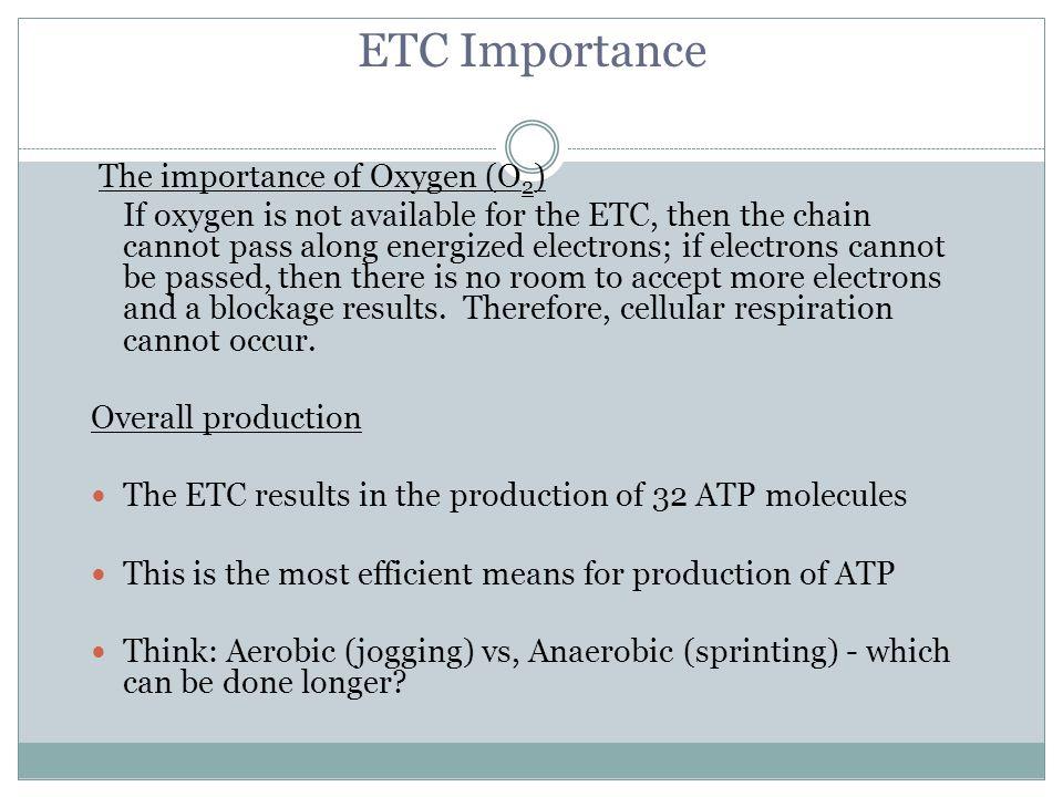 ETC Importance The importance of Oxygen (O2)