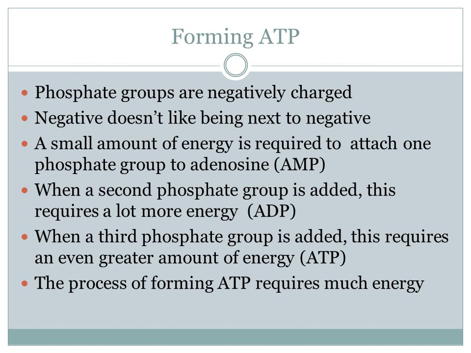 Forming ATP Phosphate groups are negatively charged