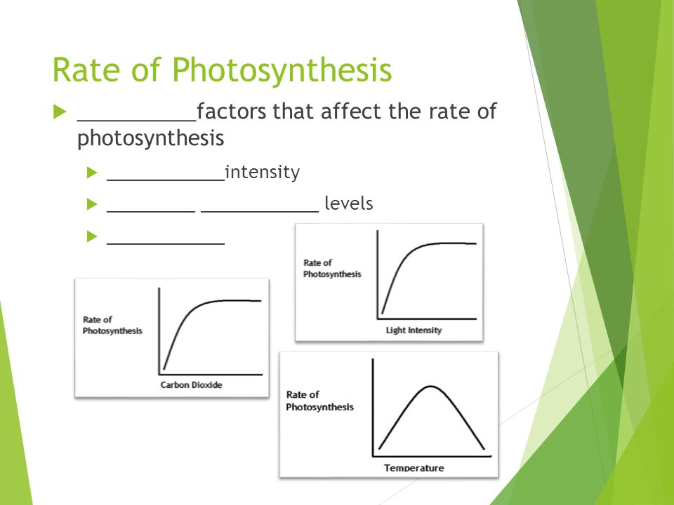 how light intensity affect photosynthesis Factors that affect rate of photosynthesis  once a certain level has been reached by the rate of photosynthesis, the intensity of light will no longer be a.