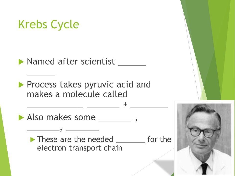 Krebs Cycle Named after scientist ______ ______