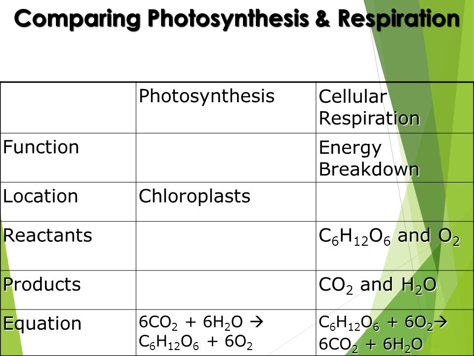 comparing photosynthesis and cellular respiration The biggest difference between photosynthesis and respiration is that photosynthesis only occurs in plants and some bacteria while respiration occurs in all living organisms.