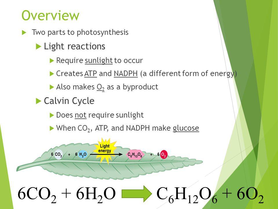 6CO2 + 6H2O C6H12O6 + 6O2 Overview Light reactions Calvin Cycle