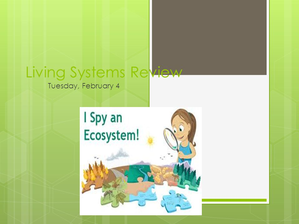 Living Systems Review Tuesday, February 4
