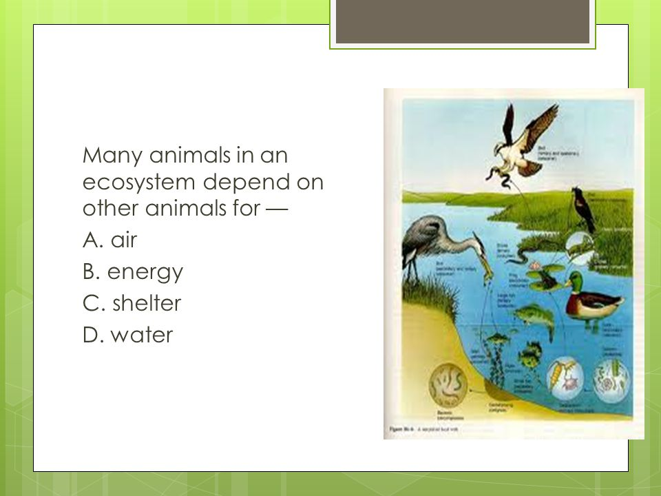 Many animals in an ecosystem depend on other animals for — A. air B